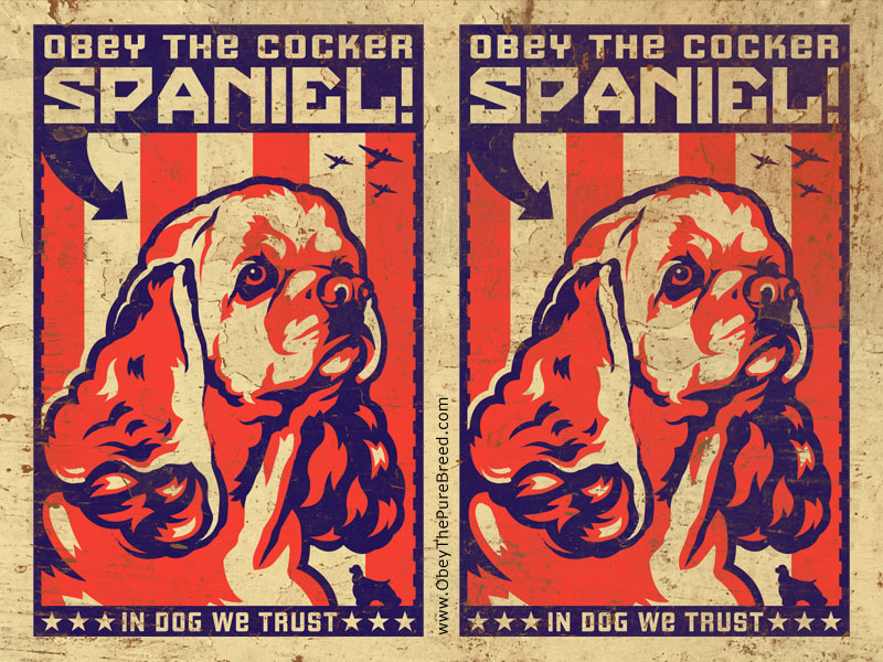 cocker spaniel wallpaper