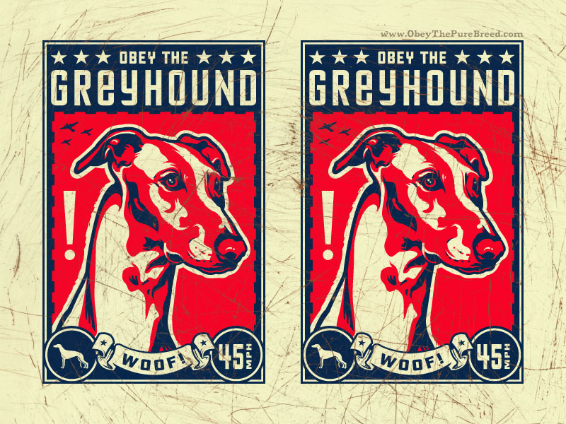 obey the greyhound dog wallpaper