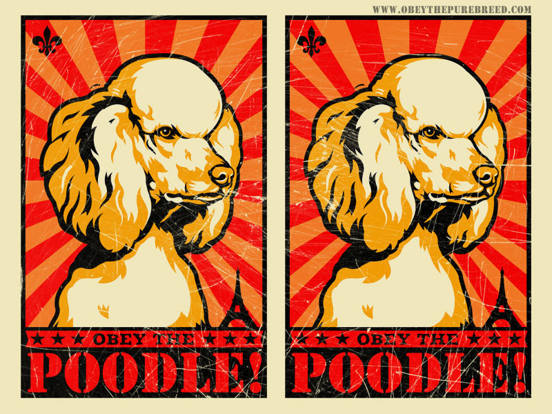 funny poodle art