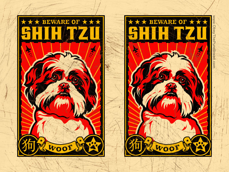 obey the shih tzu wallpaper