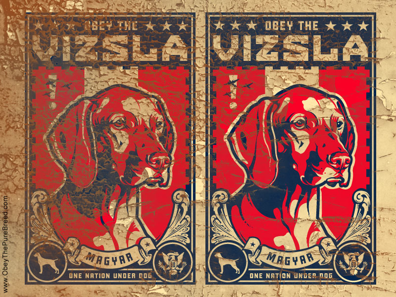 obey the vizsla dog wallpaper