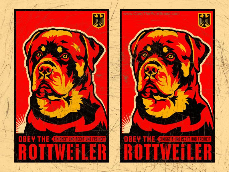 Wallpaper Rottweiler Dog