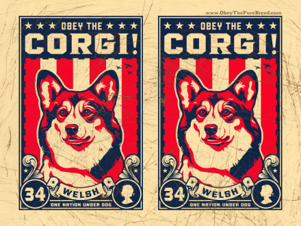 welsh corgi wallpaper