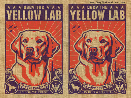 yellow lab wallpaper
